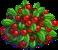 Harvestable-Cranberry Bush
