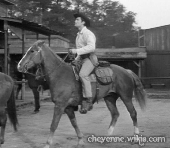 File:Brandy-horse.jpg