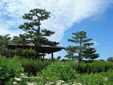 CBG Japanese Garden 1