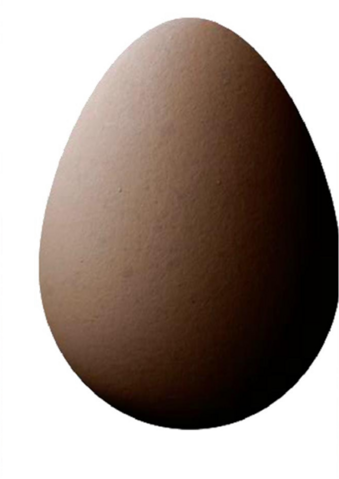 File:Brown Egg.png