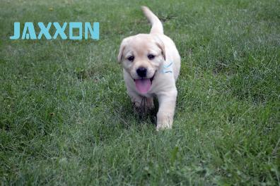 File:Jaxxon.JPG