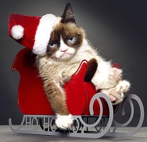 File:Grumpy cat hp.jpg