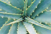 Spine-leaf-03