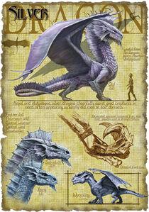 Silver dragon anatomy - Richard Sardinha