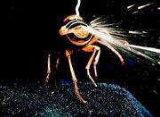 Fire-hornet-02
