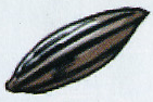 File:Seed.png