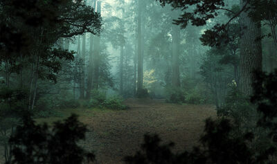 Surface - misty forest