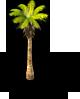 Coconut Tree 2-SW