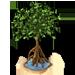 Mangrove Tree-icon