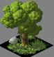 Medium Tree01