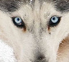 File:Snowdog-small.jpg