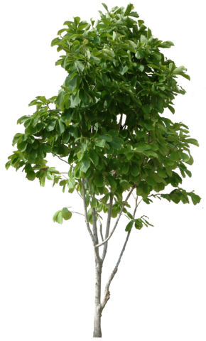 File:Real Tree.png