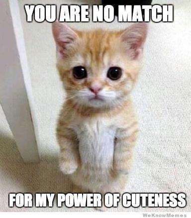 File:Cutest-kitten-ever-meme.jpg