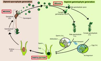Moss Altentation of Generation
