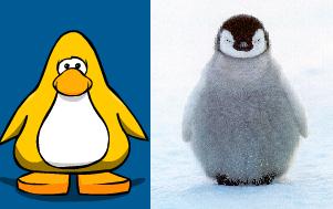 File:Penguin Comparison.png