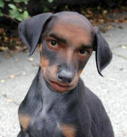 File:Weird-Dog-1058.jpg