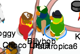 File:Paultropica6 with Billybob and Choco Late9.png
