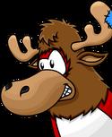 Jupiter the moose