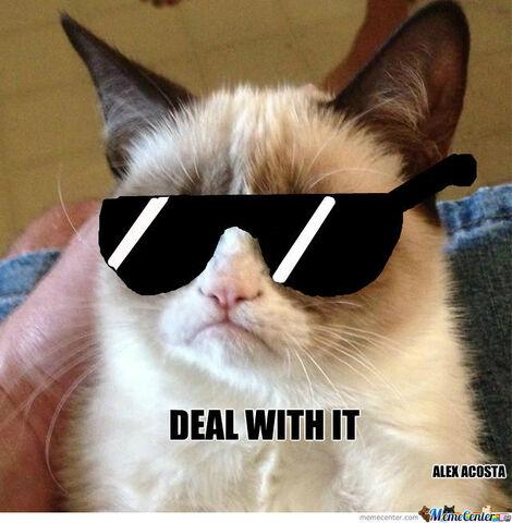 File:Grumpy-cat-deal-with-it o 1296093 (1).jpg