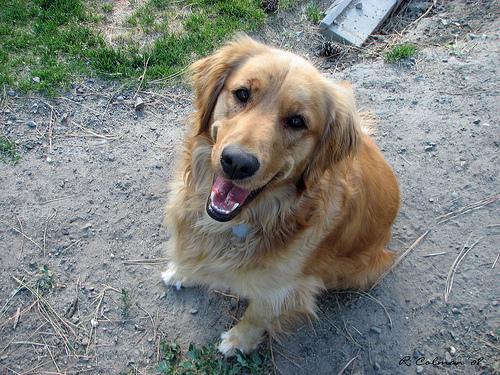 File:Happy Dog.jpg