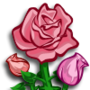 Pink Roses-icon
