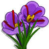 Saffron-icon