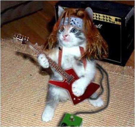 File:Cat lol guitar.jpg