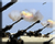 Gen1 Artillery Barrage 3 Icons