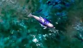 File:Dolphin.jpg