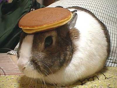 File:Pancake bunny (original).jpg