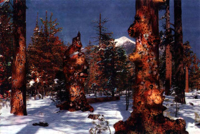 File:Tiberiumtree.jpg