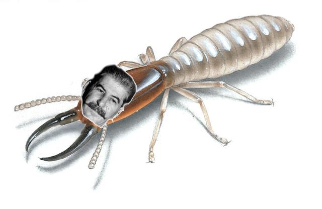 File:Termite Stalin.png