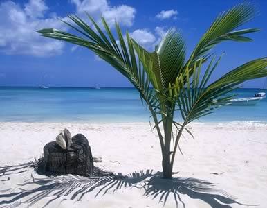 File:Dominican.jpg