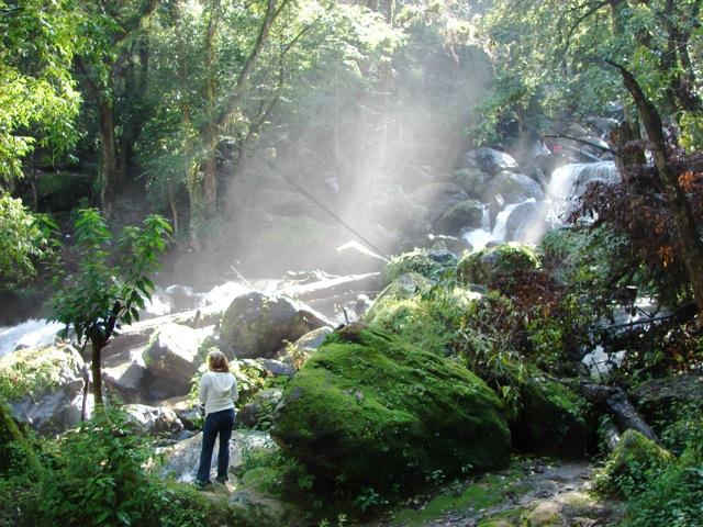 File:Jungle-7002.jpg