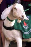 City College Mascot