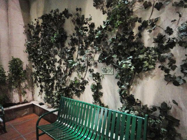 File:Ivy wall.jpg