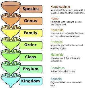 Taxonomy chart