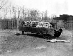 Trailer of bodies in Buchenwald 1945-04-14