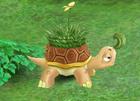 File:Grass Tortoise.jpg