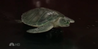 "The University of Maryland ""Terrapin on Performance-Enhancing Drugs"""