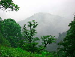 Valley of Eternal Rain