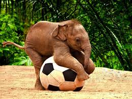 File:Elephants.jpeg