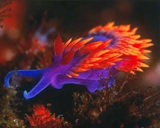 File:1-Bradford-nudibranch.jpg