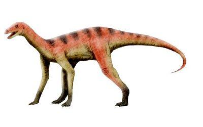 Asilisaurus NT