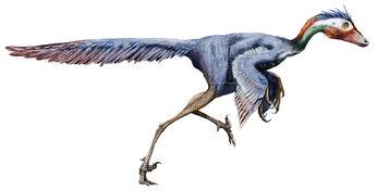 Jinfengopteryx elegans by Sheil