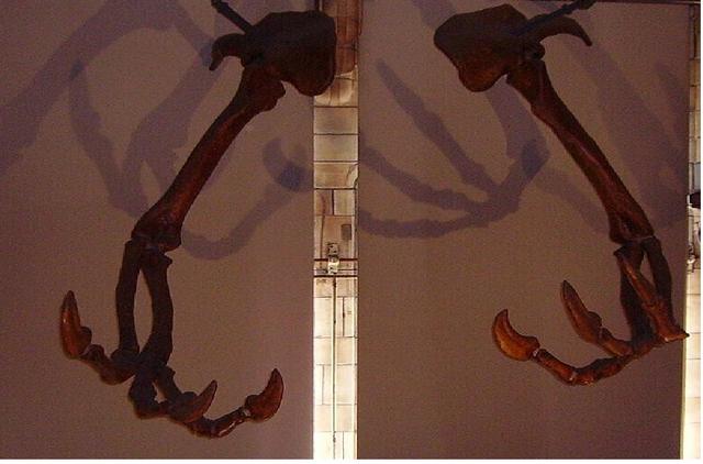 File:Deinocherius claws.png