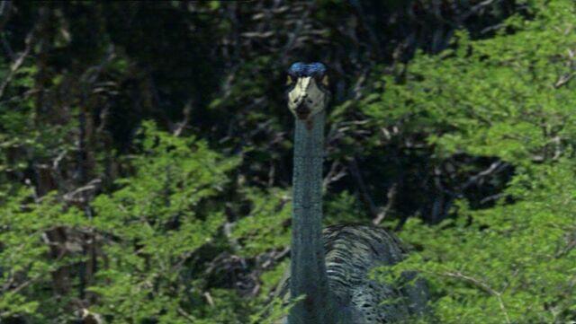 File:Ornithomimus56.jpg