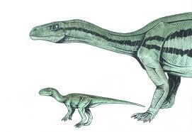 File:Mussasaur.jpg