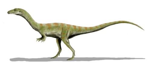 File:500px-Shuvosaurus.jpg