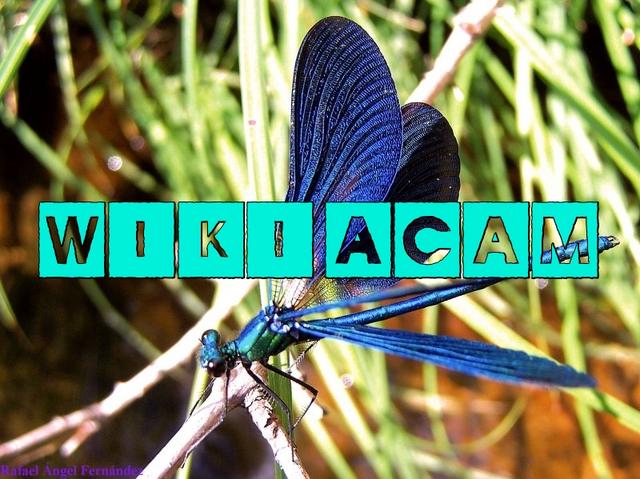 Archivo:Wikia-Visualization-Add-5,esacam.png